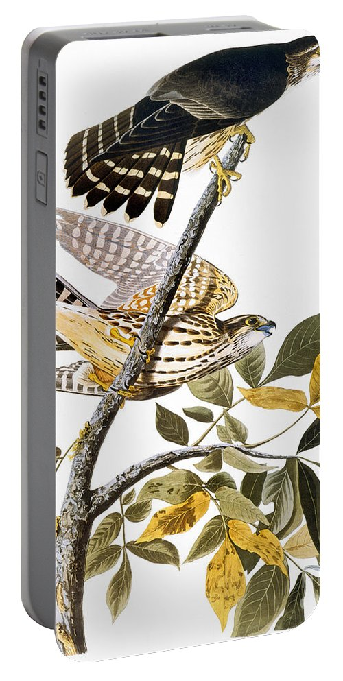 1838 Portable Battery Charger featuring the photograph Audubon: Hawk by Granger