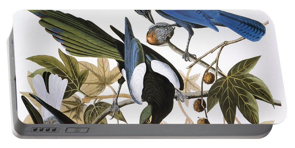 1838 Portable Battery Charger featuring the photograph Audubon: Jay And Magpie by Granger