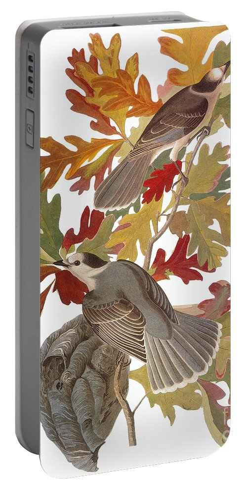1838 Portable Battery Charger featuring the photograph Audubon: Jay by Granger