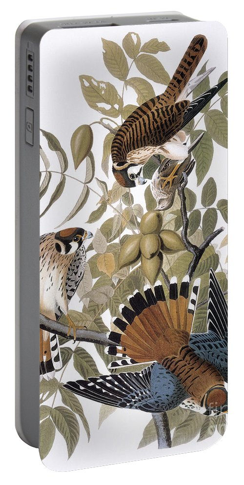 1827 Portable Battery Charger featuring the photograph Audubon: Kestrel, 1827 by Granger