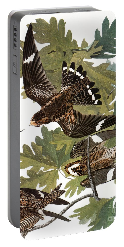 1838 Portable Battery Charger featuring the photograph Audubon: Nighthawk by Granger
