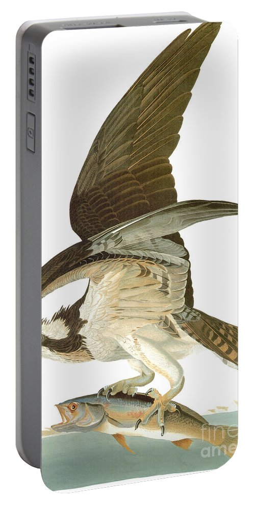 19th Century Portable Battery Charger featuring the photograph Audubon: Osprey by Granger
