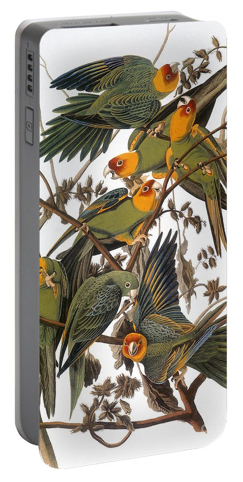 American Portable Battery Charger featuring the photograph Audubon: Parakeet by Granger