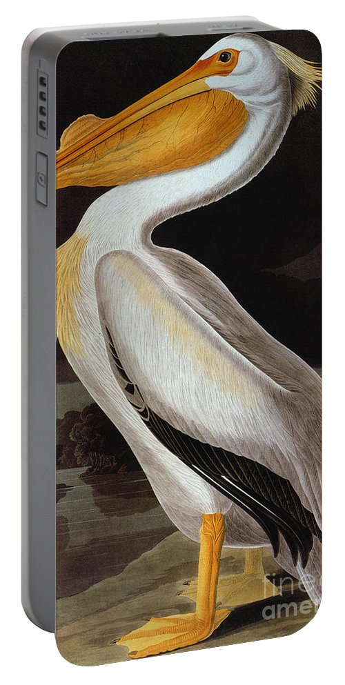 19th Century Portable Battery Charger featuring the photograph Audubon: Pelican by Granger