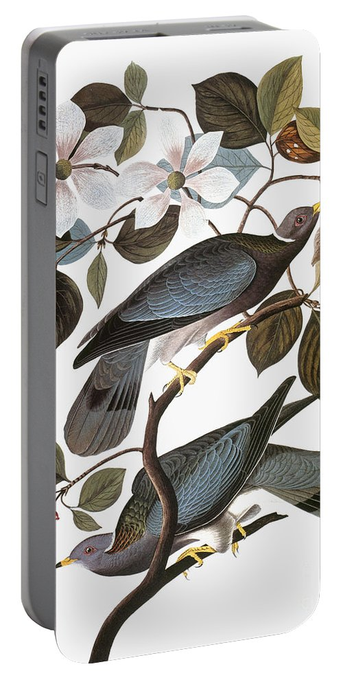 1838 Portable Battery Charger featuring the photograph Audubon: Pigeon by Granger