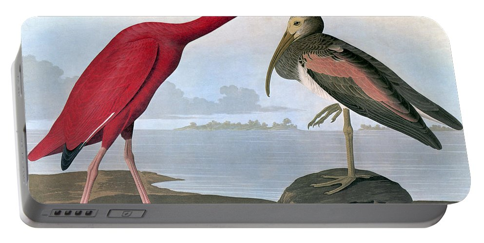 1820s Portable Battery Charger featuring the photograph Audubon: Scarlet Ibis by Granger