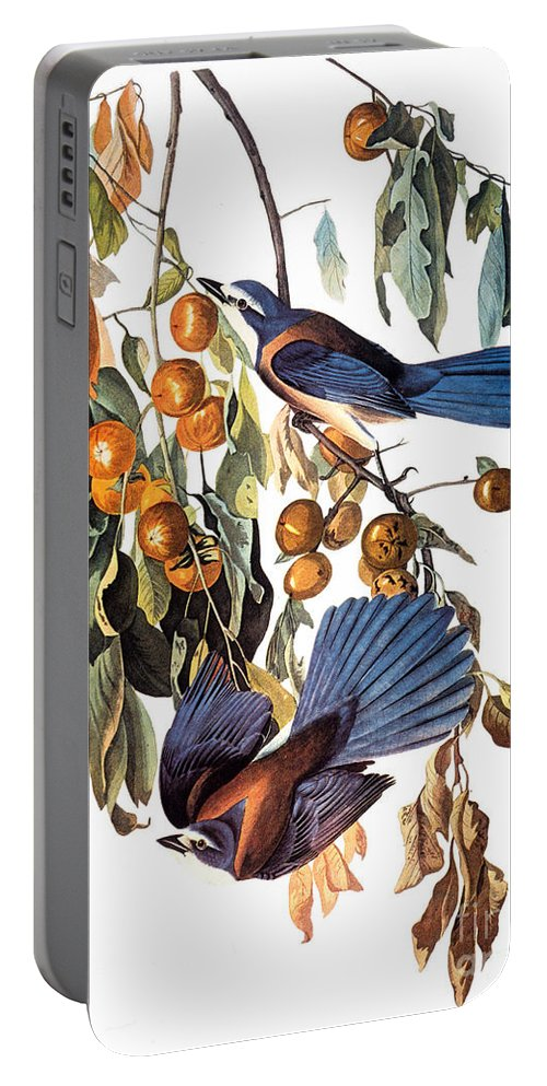 1827 Portable Battery Charger featuring the photograph Audubon: Scrub Jay, 1827-38 by Granger