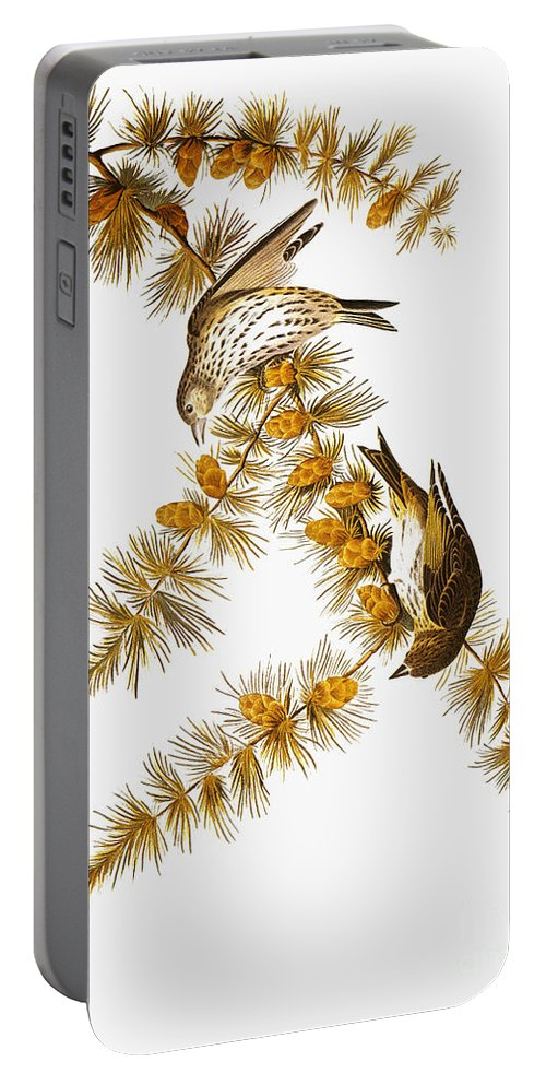 1838 Portable Battery Charger featuring the photograph Audubon: Siskin by Granger