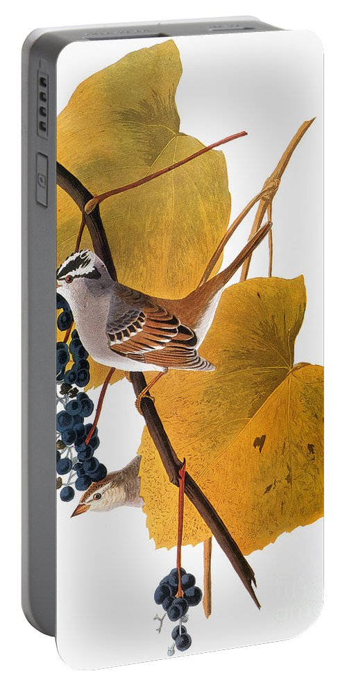 1838 Portable Battery Charger featuring the photograph Audubon: Sparrow by Granger