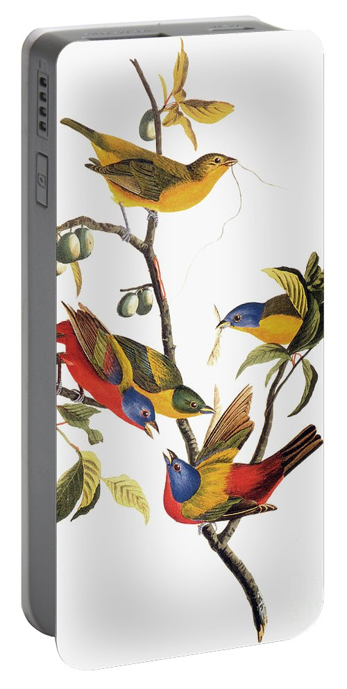 1838 Portable Battery Charger featuring the photograph Audubon: Sparrows by Granger