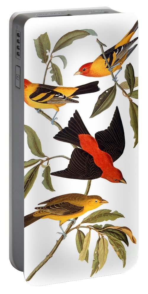 1827 Portable Battery Charger featuring the photograph Audubon: Tanager, 1827 by Granger