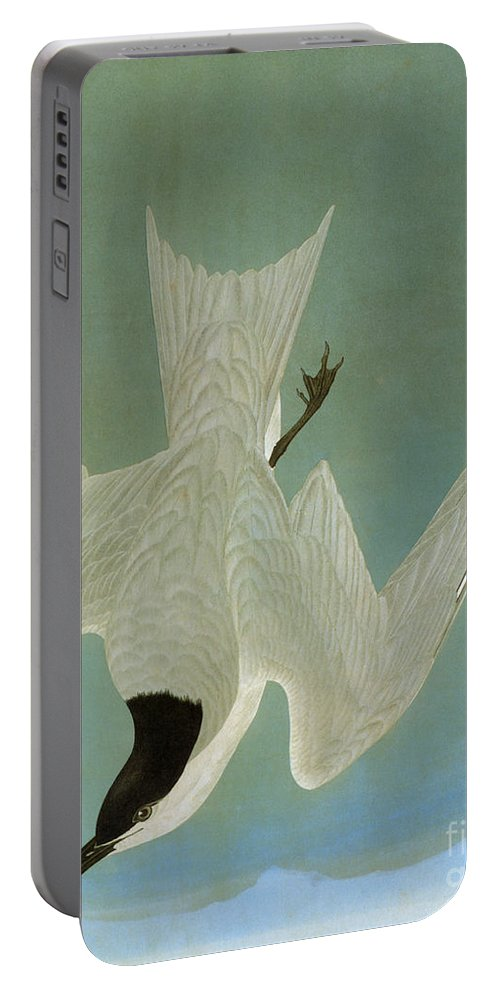 1827 Portable Battery Charger featuring the photograph Audubon: Tern by Granger