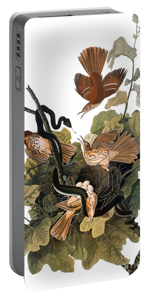 1838 Portable Battery Charger featuring the photograph Audubon: Thrasher by Granger