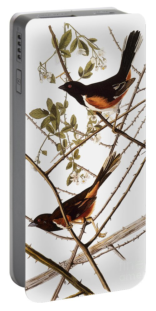 1838 Portable Battery Charger featuring the photograph Audubon: Towhee by Granger