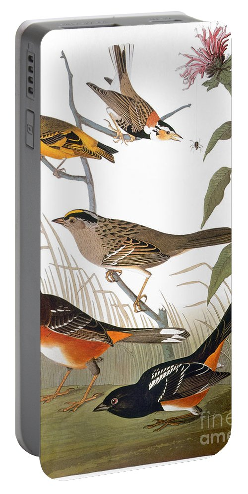 1838 Portable Battery Charger featuring the photograph Audubon: Various Birds by Granger