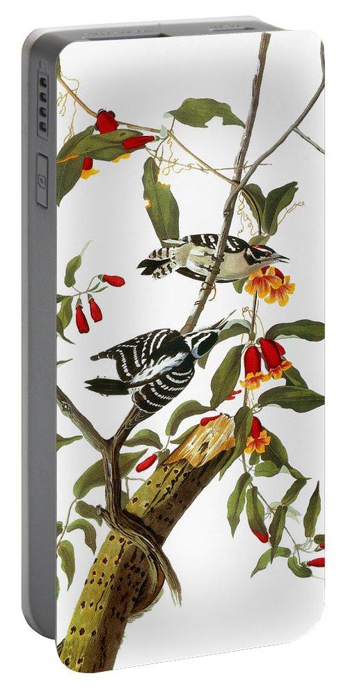 1827 Portable Battery Charger featuring the photograph Audubon: Woodpecker, 1827 by Granger