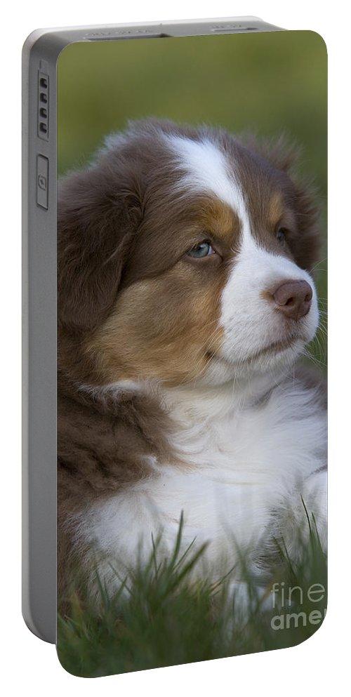 Australian Shepherd Portable Battery Charger featuring the photograph Australian Shepherd Puppy by Jean-Louis Klein & Marie-Luce Hubert