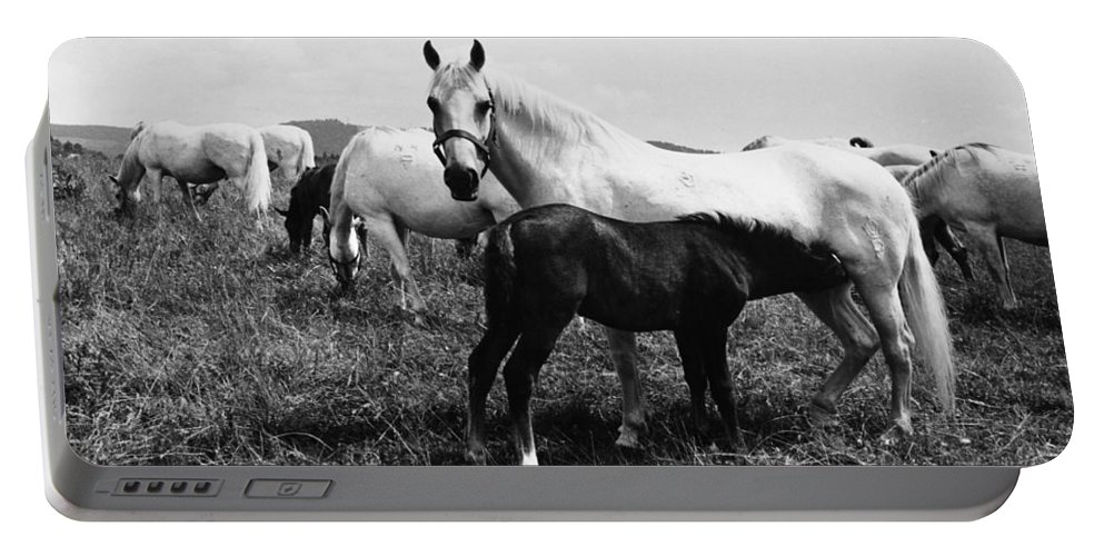 1965 Portable Battery Charger featuring the photograph Austria: Horse Farm by Granger
