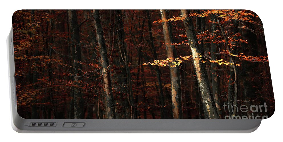 Svetlana Sewell Portable Battery Charger featuring the photograph Autumn Branch by Svetlana Sewell