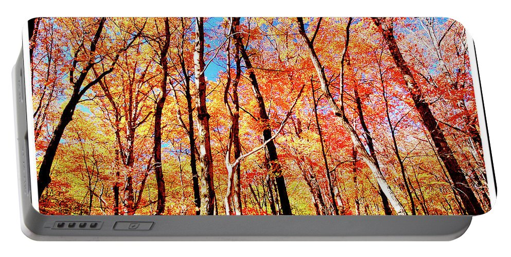 Forest Portable Battery Charger featuring the photograph Autumn Canopy by A Gurmankin