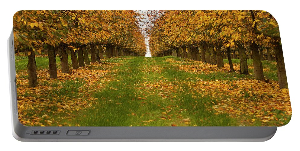 Tree Portable Battery Charger featuring the photograph Autumn Foliage by Heiko Koehrer-Wagner