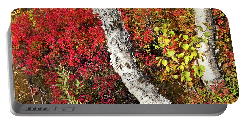 Tree Portable Battery Charger featuring the photograph Autumn Foliage In Finland by Heiko Koehrer-Wagner
