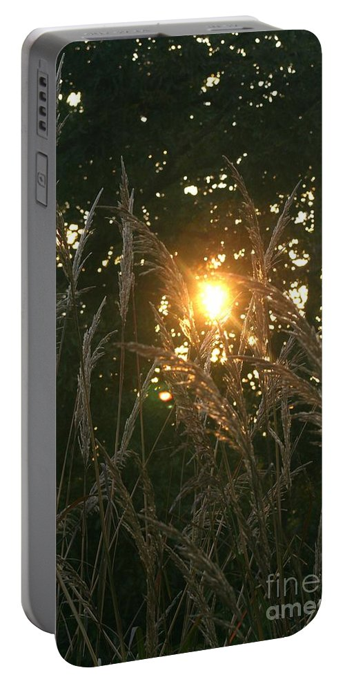 Light Portable Battery Charger featuring the photograph Autumn Grasses In The Morning by Nadine Rippelmeyer