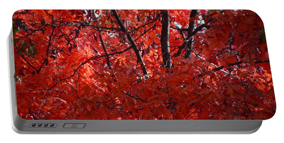 Woods Portable Battery Charger featuring the photograph Autumn Red Trees 2015 by Thomas Woolworth
