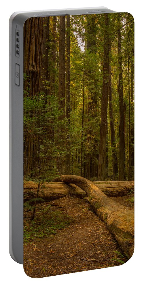 Redwood Portable Battery Charger featuring the photograph Avenue Of The Giants by Michele James