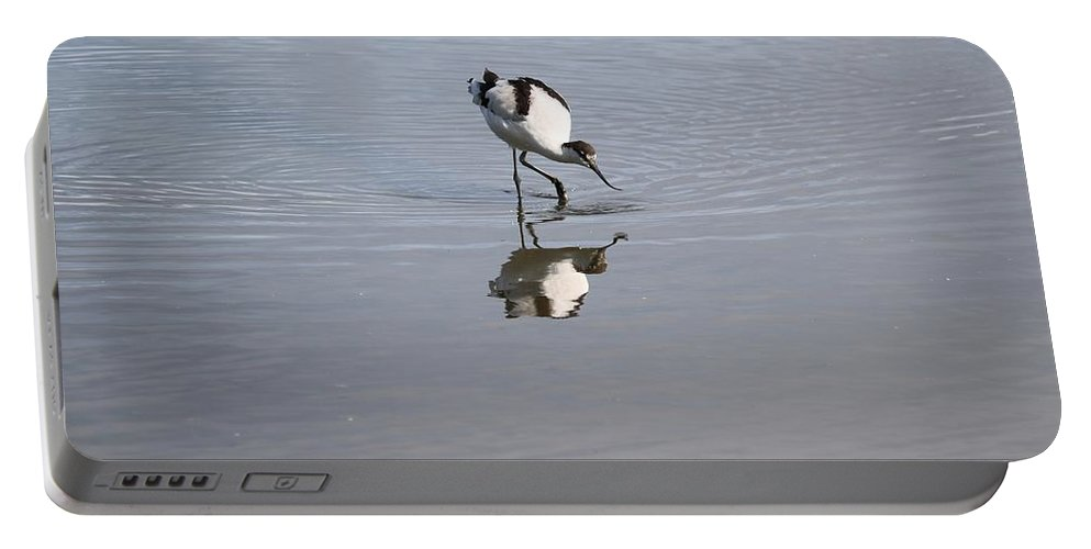 Reflection Portable Battery Charger featuring the photograph Avocet And Reflection by Michaela Perryman