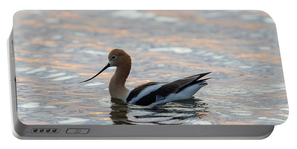 Recurvirostra Americana Portable Battery Charger featuring the photograph Avocet Sunset by Robert L Moffat