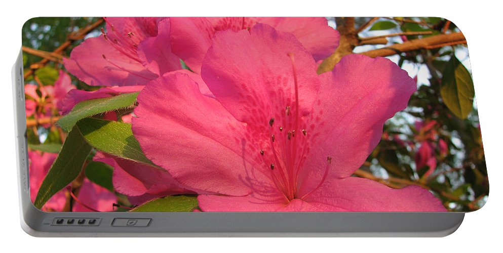 Azalea Portable Battery Charger featuring the photograph Azaleas by Stacey May