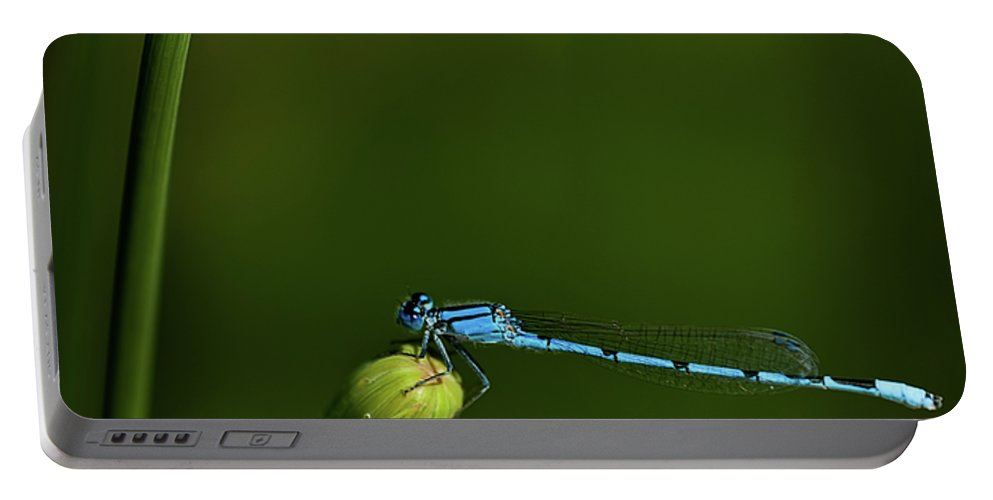 Azure Damselfly Portable Battery Charger featuring the photograph Azure Damselfly-coenagrion Puella by Onyonet Photo Studios