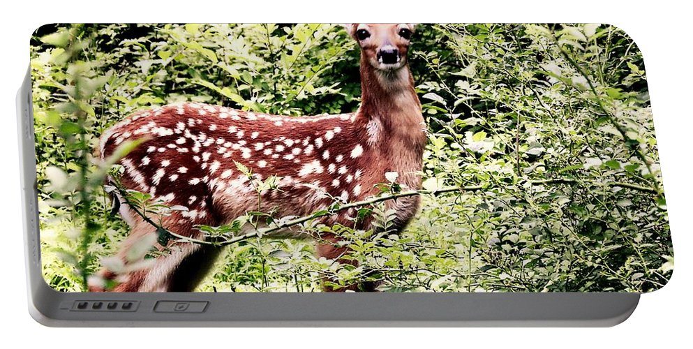 Deer Portable Battery Charger featuring the photograph Babe In The Woods by Tami Quigley