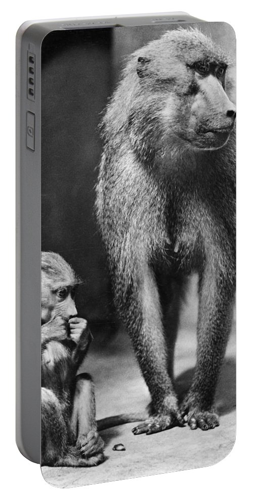 20th Century Portable Battery Charger featuring the photograph Baboon by Granger