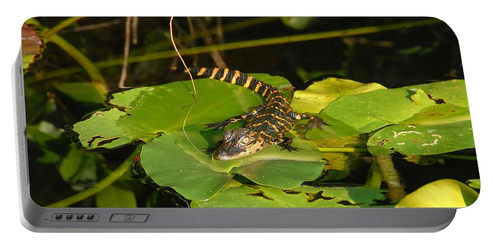 Baby Portable Battery Charger featuring the photograph Baby Alligator by David Lee Thompson