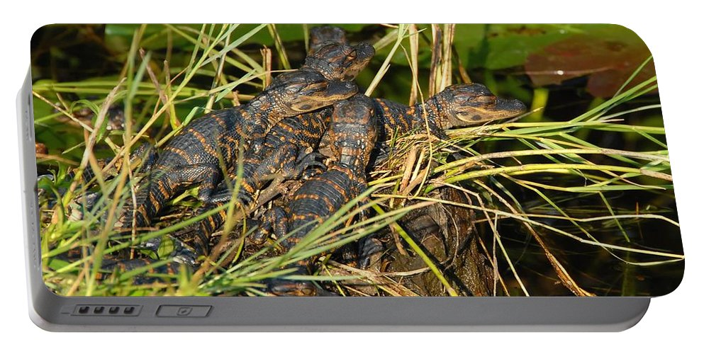 Alligators Portable Battery Charger featuring the photograph Baby Alligators by David Lee Thompson