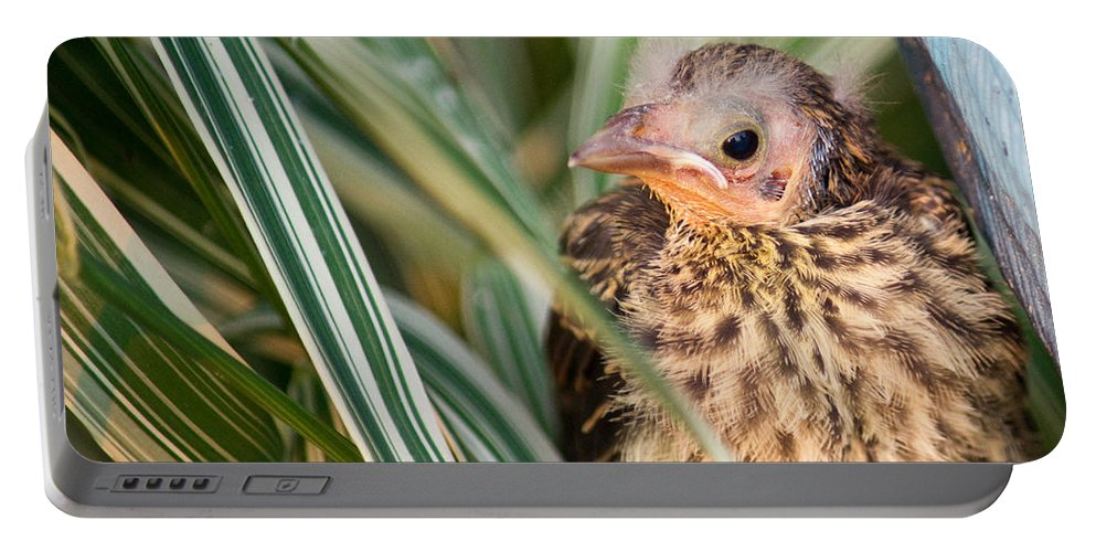 Bird Portable Battery Charger featuring the photograph Baby Bird Peering Out by Douglas Barnett