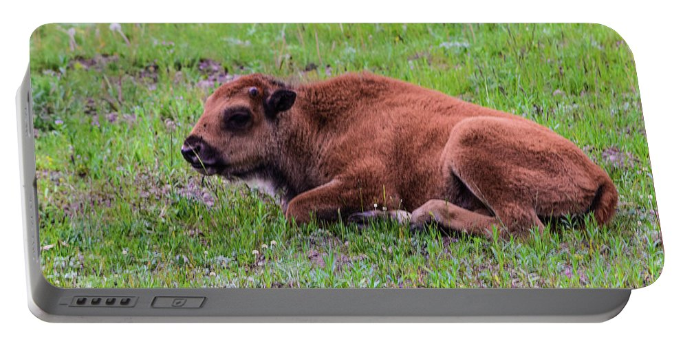 Buffalo Portable Battery Charger featuring the photograph Baby Bison by Bonny Puckett