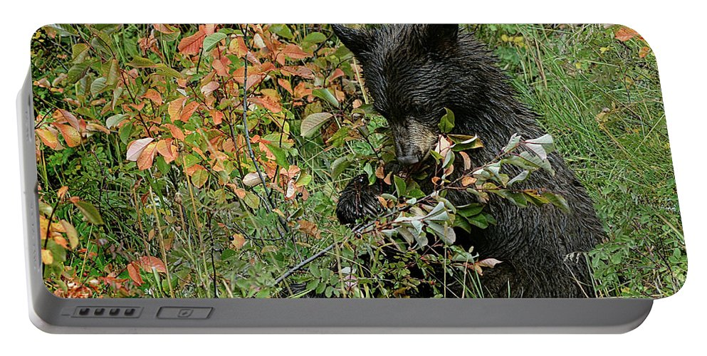 Wildlife Portable Battery Charger featuring the photograph Baby Black Bear by Nava Thompson