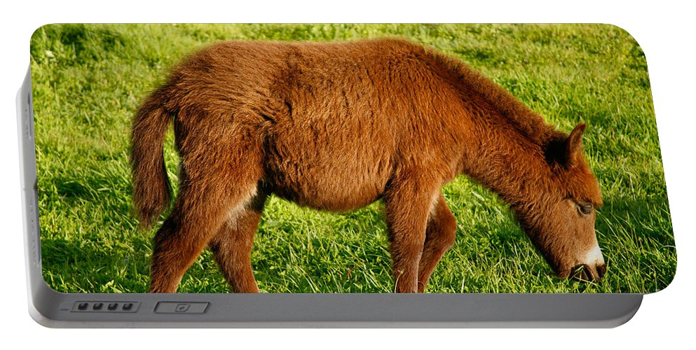 Animals Portable Battery Charger featuring the photograph Baby Donkey by Gaspar Avila