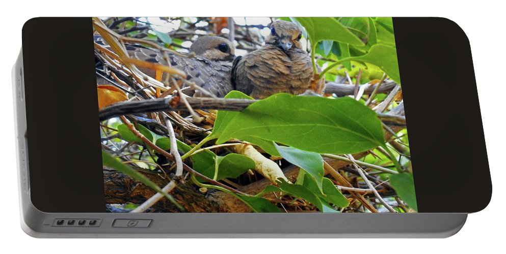 Birds Portable Battery Charger featuring the photograph Baby Doves 1 by Ron Kandt