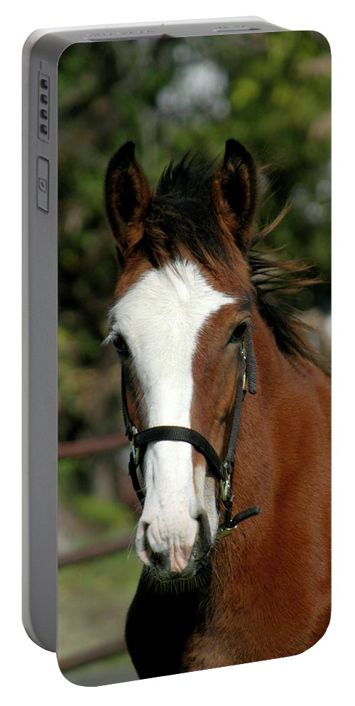 Draft Horse Portable Battery Charger featuring the photograph Baby Draft Horse by Alynne Landers