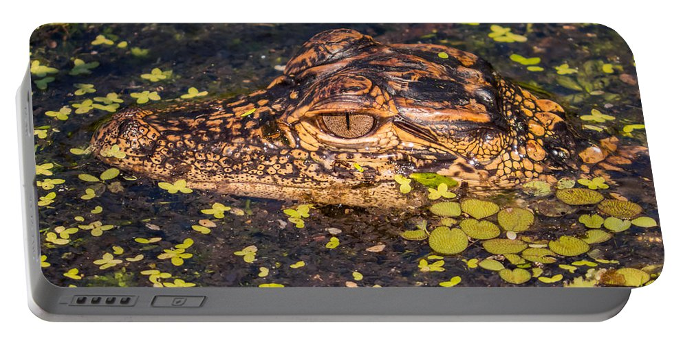 Alligator Portable Battery Charger featuring the photograph Baby Gator And Duckweed by Zina Stromberg
