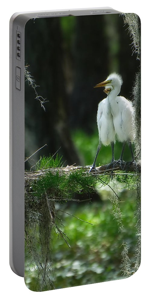 Egret Portable Battery Charger featuring the photograph Baby Great Egrets With Nest by Rich Leighton