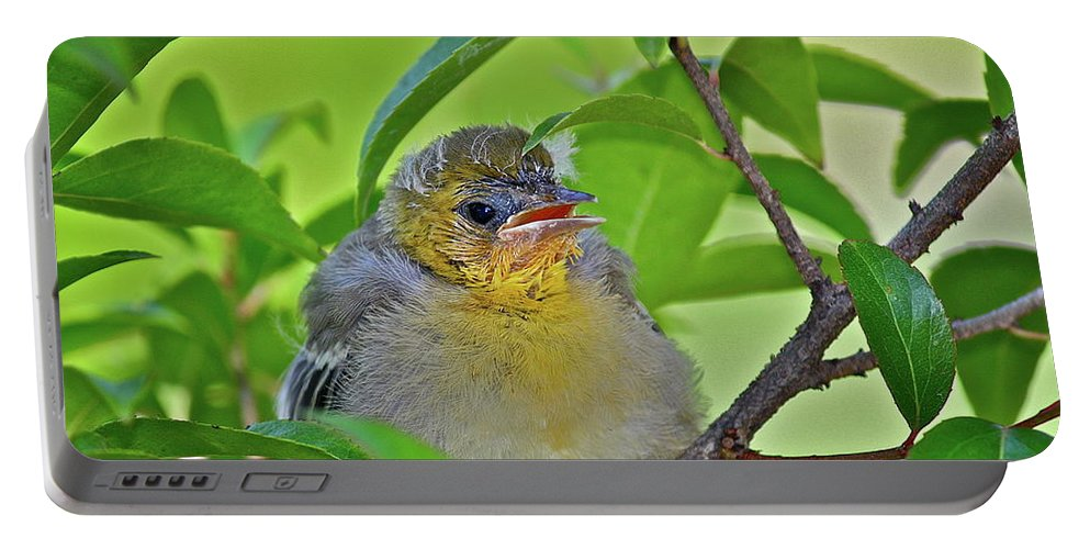 Birds Portable Battery Charger featuring the photograph Baby Oriole by Diana Hatcher