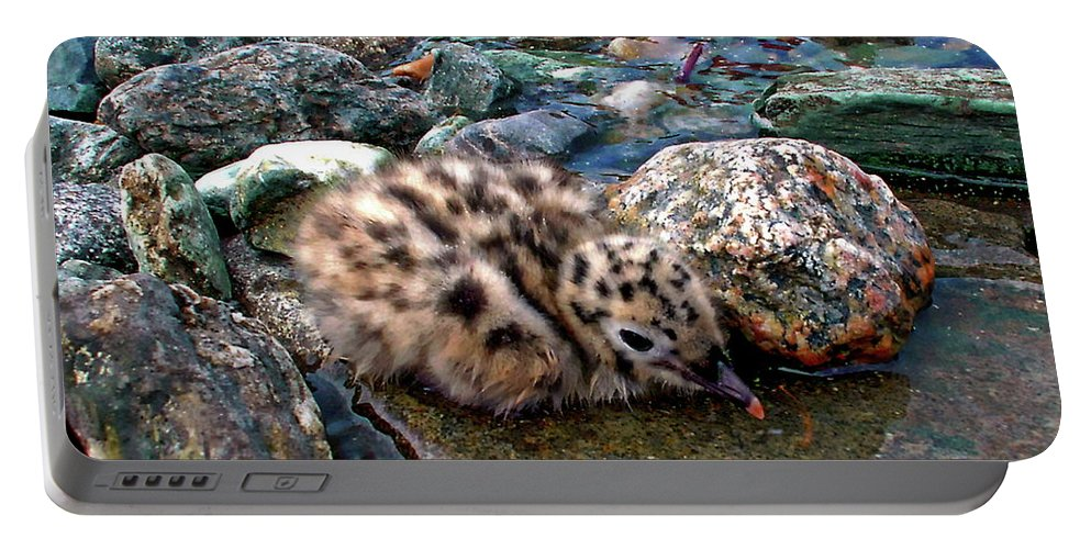Baby Portable Battery Charger featuring the photograph Baby Seagull by Anthony Dezenzio