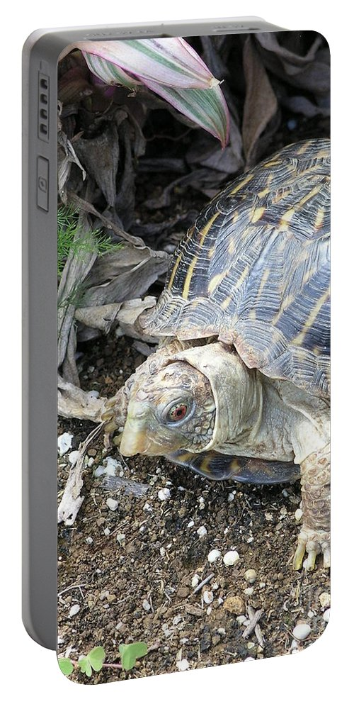 Mary Deal Portable Battery Charger featuring the photograph Baby Tortoise by Mary Deal