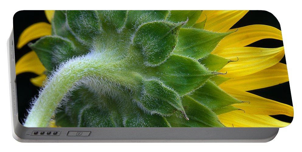 Sunflower Portable Battery Charger featuring the photograph Back Of Sunflower by Bob Neiman