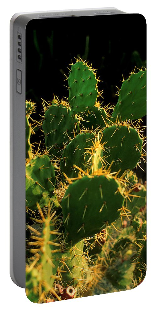 Cactus Portable Battery Charger featuring the photograph Backlit Cacti by Jerry McElroy